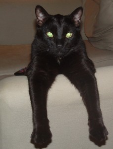 Black cats rule!!!