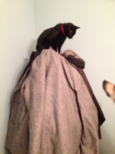 Yoshi talks to our dog from on top of the coat rack