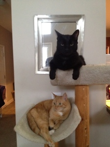 the boys on the kitty condo