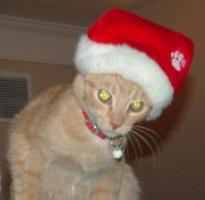 Gatsby in his Santa Hat
