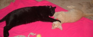 Yoshi strangling Gatsby