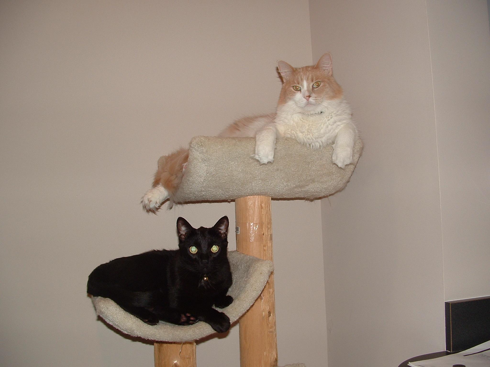 Monte and Yoshi